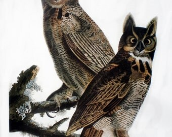 Vintage Audubon Bird Print of the Great Horned Owl, Book Plate Wall Art, Paper Ephemera, Collectible Fine Condition Bright Colors