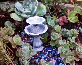 Tiny Succulents cuttings for Terrarium, Zen Garden, Miniature Fairy or dish garden, Wedding DIY