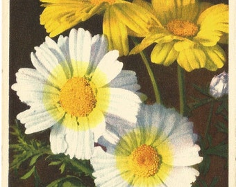Vintage Unused Botanical Postcard, ca. 1940, Marygold Flowers (Marigolds) by Thor E. Gyger, Switzerland  #662