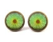 Lime Slice Earrings Fruit Stud Earrings Jewelry (with jewelry box)