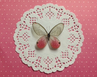 Pink Glasswing Butterfly Shadowbox