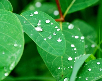 Water Droplets on Leaves Photography