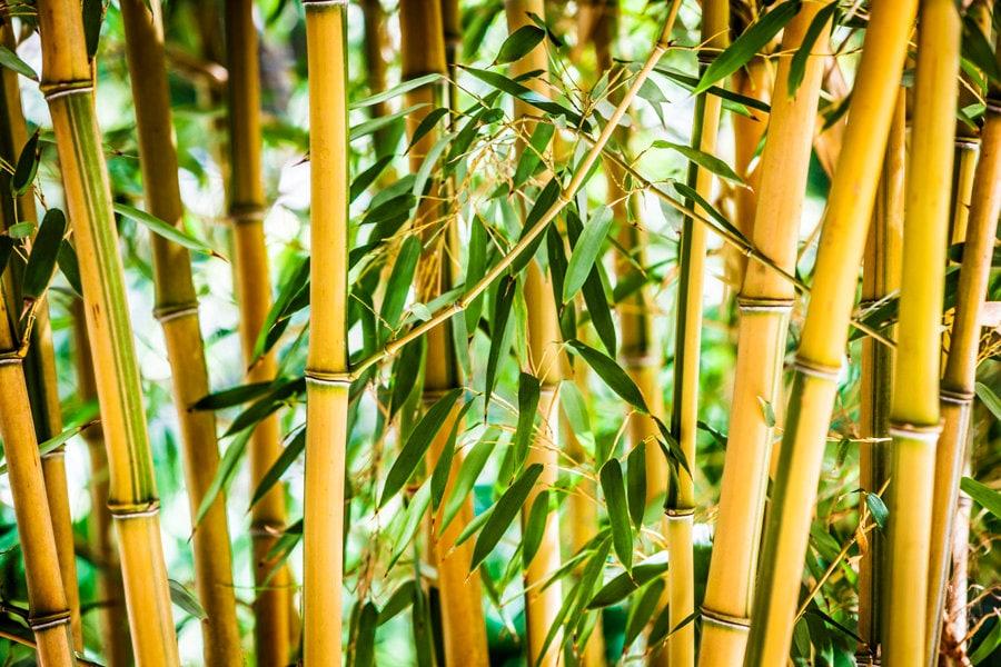 Wonderful Bamboo Sticks Wall Decor Pictures Inspiration - Wall Art ...