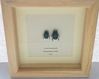 Green Scarab Beetle Pair in Natural Wood Frame