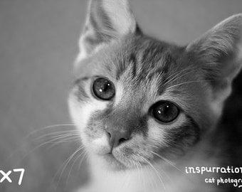 Inquisitive Gaze - 8x10 Photo Print - 5x7 Photo Print - Black and White Cat Photography - Pet Decor - Animal Photography