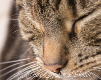 Sleeping Tabby Cat Photo Close Up Instant Download