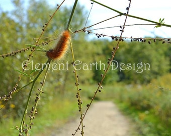 Fuzzy Orange Caterpillar, Instant Download, 14x11, Nature Walk, Digital Printable, Fine Art Digital Photo, Photography, nature photo