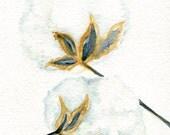 Cotton Bolls Watercolors Paintings Original,  cotton boll watercolor, Cotton illustration, Botanical Wall Art 5 x 7 cotton boll painting