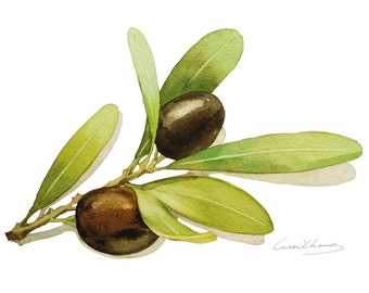 Olives Painting - Watercolor Olives -  5 by 7 print - Watercolor Painting, Archival Print, Minimalist, Home Decor, Garden Art
