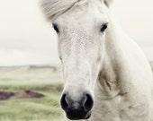 Horse Photograph, horse photography, portrait, Icelandic horse landscape