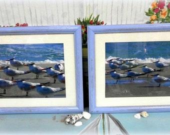 Framed Beach Photographs Flock Of Seagulls, Nautical Decor, Beach Decor, Wall Art, Set of 2, Free Shipping In USA