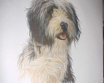 Bearded Collie Dog Print by Robert J. May - Beautiful!
