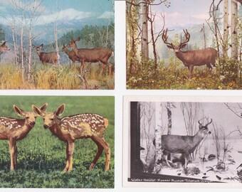 4 Vintage Deer Postcards - Great Woodland Decor
