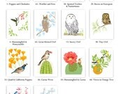 "SAVE 54%! Bulk Deal Set of 12 Art Prints: Birds and Gardens 8"" x 10"" Reproductions"