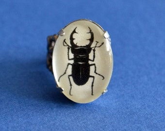 STAG BEETLE Ring - Silhouette Jewelry