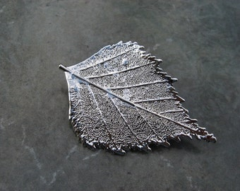 Sale - Free US Shipping - Real Leaf Brooch/Pin and Pendant - Sterling Silver - Birch