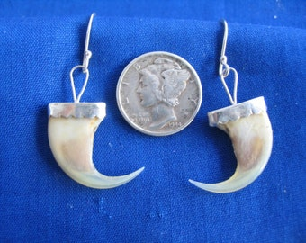 Bobcat claw earrings