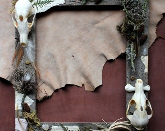 Foxes in the Henhouse - barn wood frame assemblage with red fox skulls, chicken bones, feathers, moss, ferns , other natural materials