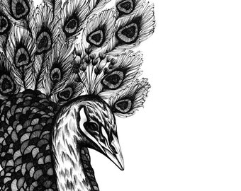 SALE - Peafowl,  print A4, 21x30cm, 210x297 mm