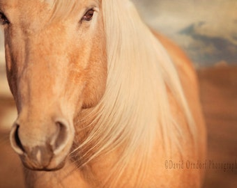 West Wind - Fine Art Photography - 8x12 - Horse photography - Animal portrait - Decor