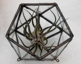 Geometric glass terrarium or candle holder - Icosahedron  20 triangles - solo item sits (also hang or stand above wood base) - rustic copper