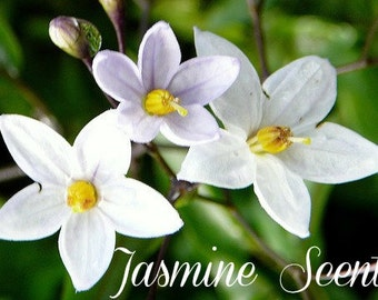JASMINE Scented Soy Wax Melts - Floral Soy Candle Tarts - Wickless Candles Air Freshener - Highly Scented - Handmade & Poured In USA