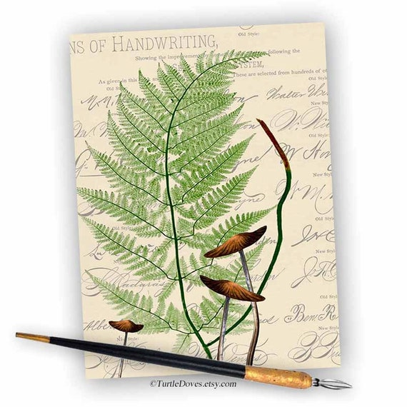 Lovely Curved Fern - Single 5x7 Card - Woodland Note Card