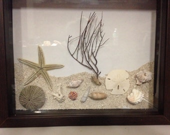 Seashell and Sand Shadow Box Framed Decorative Sea Shell Collectio