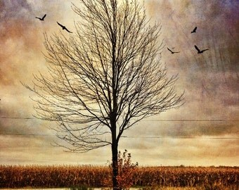 lonely tree photo, home decor, country photo,, landscape, countryside, farm, birds, autumn, texture, yellow, purple, Ontario, rural, canada