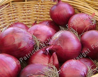 Red Onions in Basket 8x10 Stock Photo Download