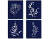 Seaweed Print Blue Beach House Wall Art Set, Navy Coastal Decor, Oversized, Large, Nautical Artwork