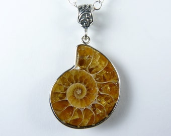 Genuine Fossil Necklace, Ammonite Fossil Pendant with Warm Butterscotch, Caramel, and Honey Colors, Luxurious Sterling Silver Bail and Chain