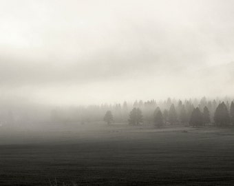 Timberline Firs in the Fog Landscape Photography