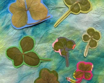 Seven Lucky FOUR LEAF CLOVERS, Ready to use in Papercraft, Real Preserved Four-Leafed Clover
