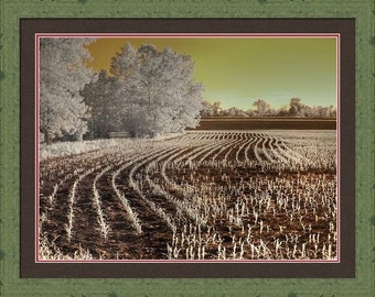 Missouri Corn Field, agriculture, farm photography, infrared photography, farmer photo, corn field, farming, agriculture photography, grow