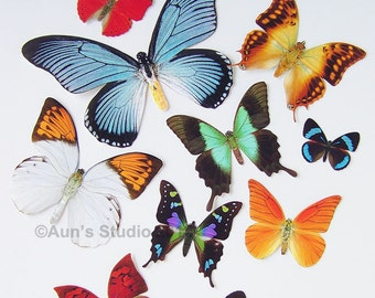 Realistic Paper Butterfly Cutouts - Large Set of 11