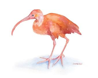 Ibis Watercolor Painting - 5 x 7 - Giclee Print Bird Painting - Scarlet Ibis