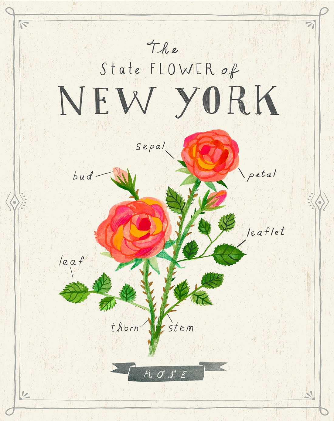 New York State Flower Print The Rose
