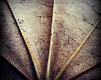 Nature Leaf Photography Autumn Fall Brown Dark Rustic Home Decor Macro Square 8x8 Print Up Close