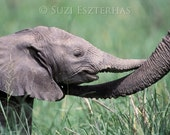 40% OFF SALE, Baby Elephant Love, Animal Photography, Photo, 8 X 10 Print, Wildlife Photography, kids Room, Nursery Art, African Safari, Zoo