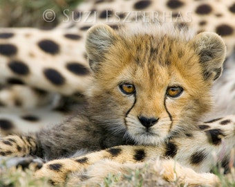 BABY CHEETAH PHOTO Print, Baby Animal Photography, African Wildlife Photograph, Baby Nursery Decor, Wall Art, Safari Nursery, Cheetah Cub
