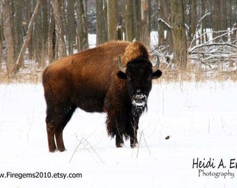 Blank Note Card, Photo Note Card, Greeting Card, Photo Card, Wildlife Note Card, Blank Photo Card, Buffalo Photography, Nature card, Buffalo
