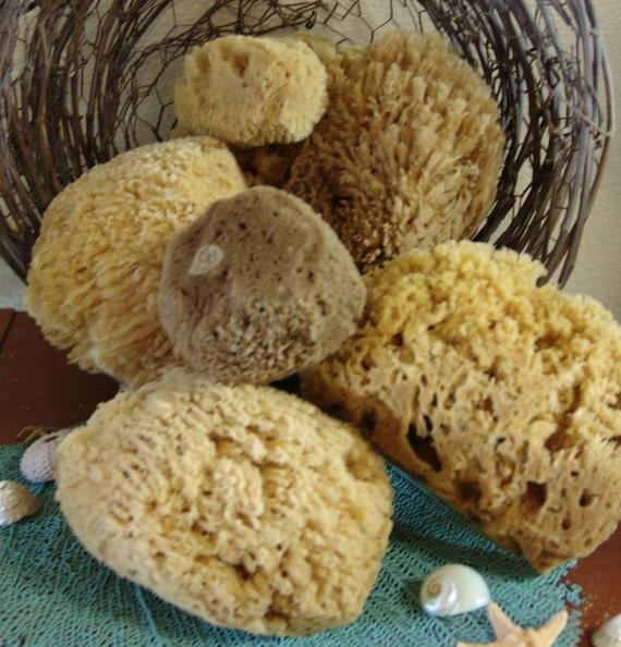 Wholesale Assorted Lot Natural Sea Sponges Bath Beauty