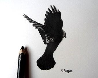 Jackdaw original charcoal sketch, crow drawing, original art, charcoal drawing, pencil drawing, bird art, bird drawing, crow art,