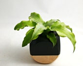 Geometric Succulent Cactus Planter // Black + Wood Colorblock