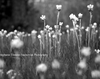 Flower, Gray, White, Black, Black and White, Nature Photography