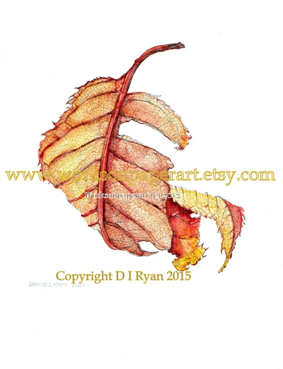 Fall - Woodland - Art print  - Home Decor - Autumn Leaf II - Limited Edition Botanical Print from Original Watercolour