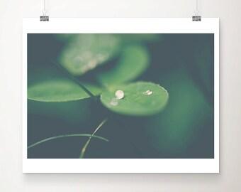 clover photograph leaf photograph nature photography rain photograph macro photography green home decor botanical print clover print