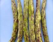 BEST TASTING Rattlesnake Pole Bean Organic Heirloom Very Rare Non Gmo Non Hybrid Seeds