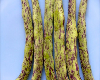 BEST TASTING Rattlesnake Pole Bean Organic Heirloom Very Rare Non Gmo Non Hybrid Seeds
